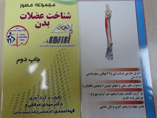 فلش کارت شناخت عضلات بدن-کرمان