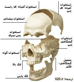 اشنایی با دستگاه سیستم عضلانی-استخوانی بدن