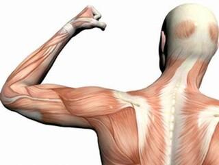 قدرت و استقامت عضلانی